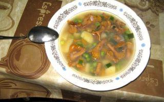 Как приготовить грибной суп из лисичек: пошаговые фото и рецепты приготовления первых блюд