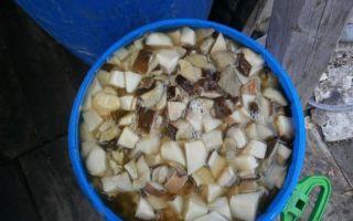 Сколько времени нужно варить грибы рядовки до готовности перед жаркой, заморозкой, маринованием, засолкой и запеканием