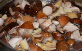 Засолка волнушек в домашних условиях на зиму горячим способом: рецепты с фото и видео