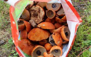 Где собирать осенние опята в воронеже и воронежской области: самые грибные места
