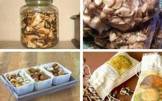 Правила хранения грибов в домашних условиях: способы, как правильно хранить грибы