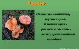 Где растут опята в саратовской области, фото и названия съедобных грибов