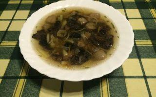 Грибные супы из свежих, замороженных и сушёных подосиновиков: фото, рецепты, как варить первые блюда