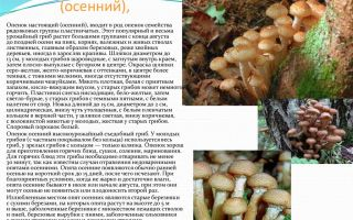 Как пожарить рыжики с яйцом на сковороде и приготовить вкусный грибной