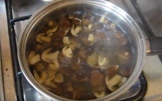 Маринование рядовок: фото, пошаговые рецепты, как мариновать грибы на зиму в домашних условиях