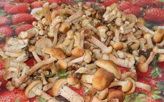 Где можно собирать опята в липецке и где растут грибы в липецкой области