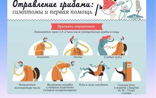 Можно ли отравиться солеными, маринованными, жареными рыжиками: симптомы отравления грибами, как оказать пострадавшему помощь