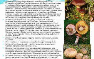 Грибы маслята: фото и описание видов, как отличить масленок обыкновенный от других разновидностей