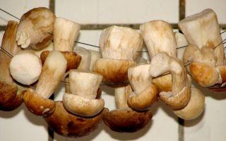 Сушеные вешенки: как сушить грибы и готовить из них блюда