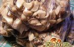 Как правильно хранить рыжики: как сохранить грибы в холодильнике, морозилке или подвале