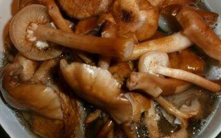 Крупные опята на зиму: рецепты приготовления вкусных блюд