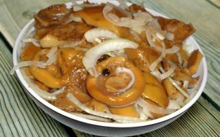 Засолка сыроежек в домашних условиях: рецепты приготовления соленых грибов быстро и вкусно