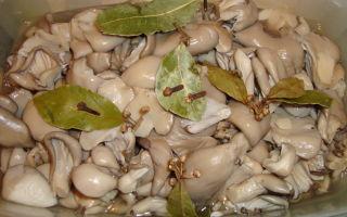 Что можно делать с грибами вешенками: рецепты на зиму и на каждый день