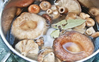 Как правильно приготовить грибы волнушки: фото, видео и рецепты вкусных блюд в домашних условиях