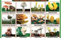 Виды несъедобных для человека лесных грибов: фото, названия и описание
