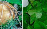 Маринованные грибы на зиму — 132 рецепта в банках с пошаговыми фото