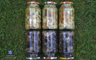 Под какими крышками нужно закрывать маринованные грибы на зиму: полезные рекомендации