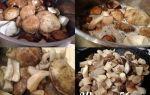 Как приготовить жареные подберезовики: фото и пошаговые рецепты приготовления грибов разными способами