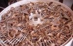 Рецепты сушки маслят на зиму: как можно сушить грибы в электросушилке, духовке и на солнце