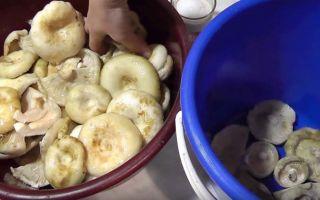 Опята, жареные с майонезом на сковороде: как пожарить грибы
