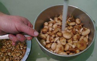 Надо ли вымачивать грибы опята перед варкой, засолкой, жаркой и маринованием: обработка грибов