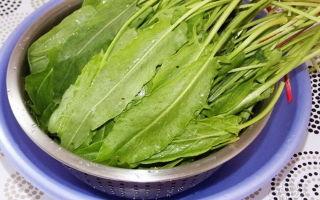 Щавель под капроновую крышку на зиму — рецепт приготовления с пошаговыми фото