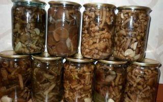 Рецепты закусок из грибов опят на зиму и на каждый день