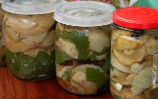 Засолка волнушек на зиму холодным способом: рецепты, фото и видео соления грибов