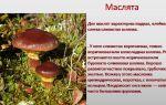 Как мариновать грибы черные грузди: рецепты с фото и видео для применения в домашних условиях