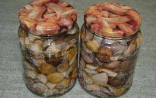 Белые маринованные грибы на зиму: рецепты без стерилизации, как замариновать в банках
