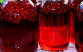 Компот из земляники луговой на зиму — рецепт с пошаговыми фото