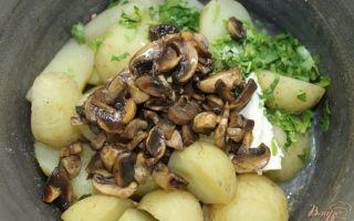 Грибные щи и борщи из свежей и квашеной капусты: рецепты первых блюд с грибами