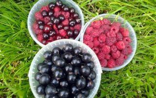 Варенье-пятиминутка из вишни с косточками в сиропе на зиму — рецепт с пошаговыми фото