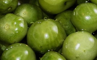 Засолка зеленых помидоров на зиму холодным способом в ведре — 5 рецептов с фото пошагово