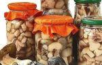 Правила заготовки грибов впрок: консервирование, соление и сушка грибов в домашних условиях