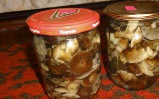 Грибы опята, квашеные на зиму: рецепты приготовления грибных заготовок
