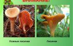 Ядовиты ложные лисички или нет: фото грибов, похожих на лисички и основные отличия