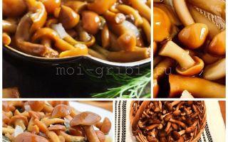 Опята на зиму — 28 рецептов заготовок грибов с пошаговыми фото