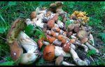 Где собирать грузди в челябинске и челябинской области: лучшие места сбора грибов