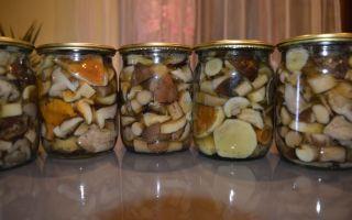 Какие грибы маринуют на зиму, какие грибы можно мариновать вместе, через какое время их есть