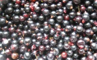 Черная смородина с сахаром протертая блендером на зиму — пошаговый рецепт с фото