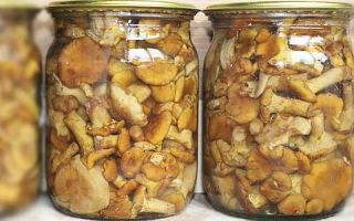 Салат с грибами груздями: рецепты с фото, как приготовить с курицей, помидорами, луком и картошкой