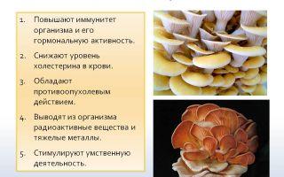Польза и вред грибов груздей для организма человека: их полезные свойства и противопоказания для употребления