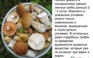 Как хранить белые свежие грибы в холодильнике: можно ли это делать, в течение какого срока