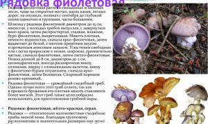Съедобные грибы рядовки: фото и описание рядовки желто-красной, серой и фиолетовой