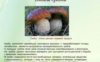 Белые грибы: польза и вред для организма человека, есть ли влияние на самом деле