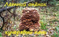 Как быстро растут грибы опята в лесу за сутки, и какая погода нужна для роста