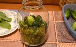 Засолка огурцов в 3-х литровых банках на зиму — 18 рецептов хрустящих огурцов с пошаговыми фото
