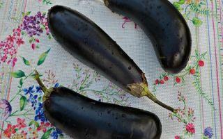 Баклажаны в томате на зиму — рецепт приготовления с пошаговыми фото