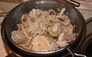 Приготовление сыроежек: фото и видео-рецепты, как правильно приготовить грибы после сбора